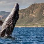 Звіт: «Ефіріум-кити» дотримуються накопичувальної тактики